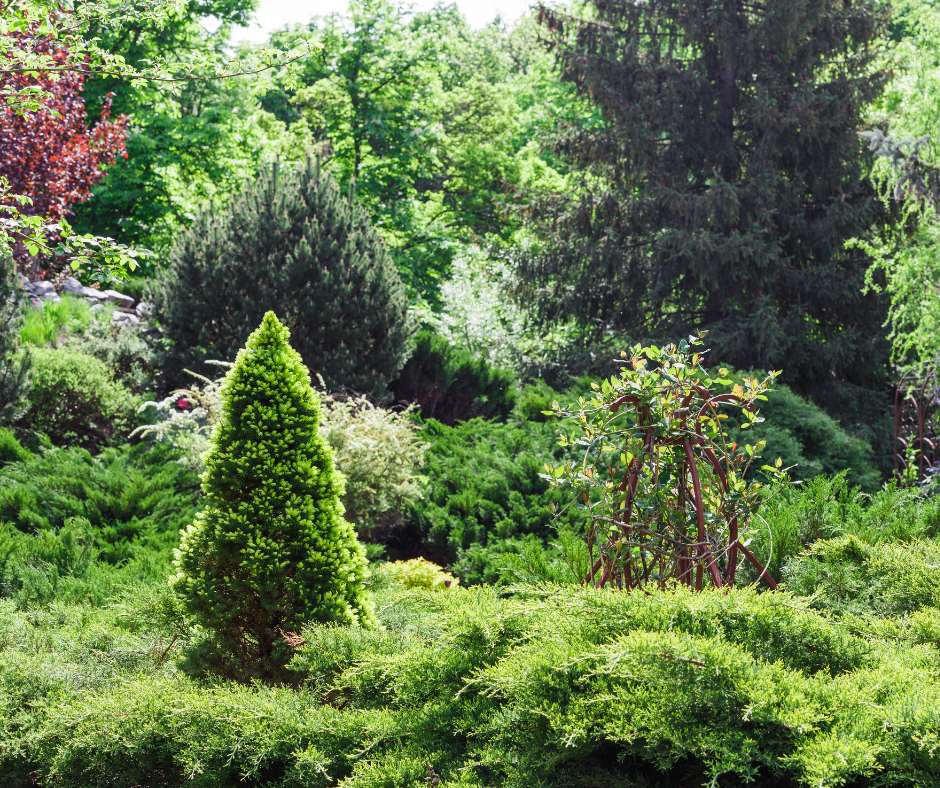 3 Ideas for Budget Friendly Eco-Friendly Landscape Design