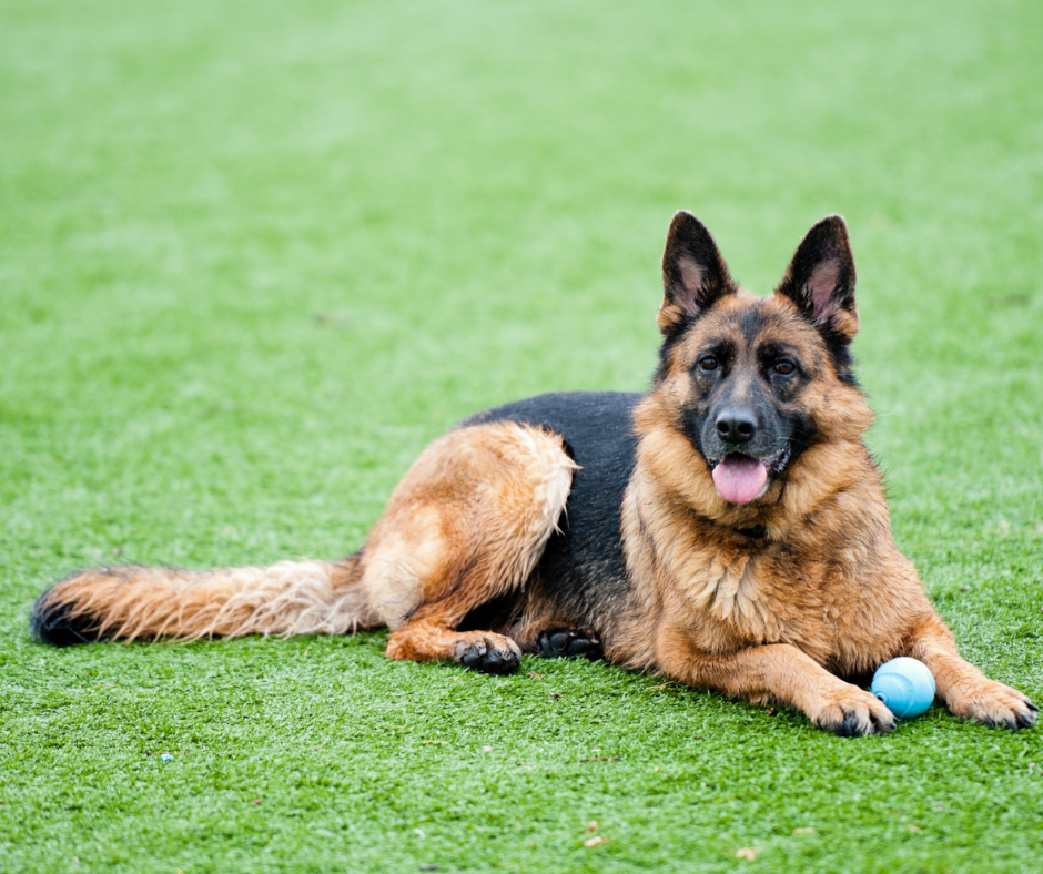 Pet Friendly Artificial Grass: How Much Does it Cost, and is the Investment Worthwhile?